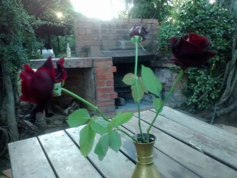 Black roses in John's backyard