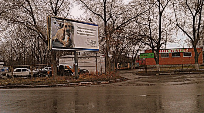 This is how you care for stray pets as your city is shelled by internationally banned cluster missiles. A testimony by animal welfare charity in Kramatorsk, Ukraine